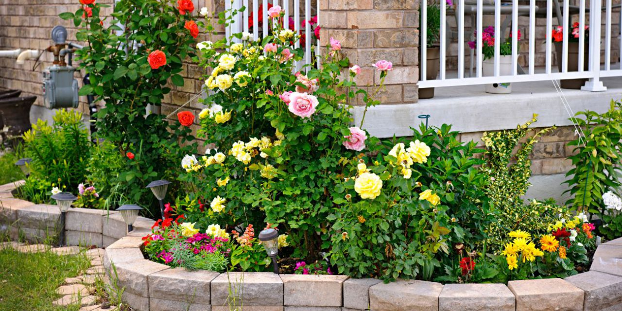 Grow your own rose garden